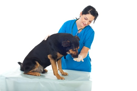 doctor giving pills: Veterinary woman giving a pill to a dog on table