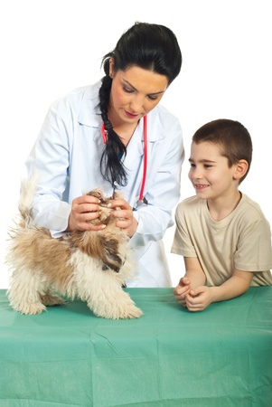 Veterinary examine puppy mouth and the child looking with happy face photo