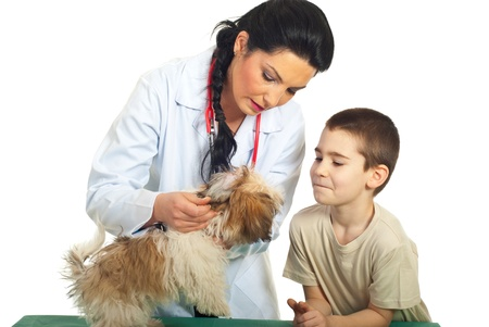 Doctor vet checking puppy ears and the child looking with admiration over white background photo