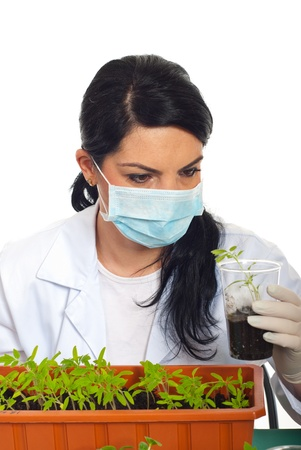 examine: Close up of scientist woman examine new leafs of tomato in soil in laboratory