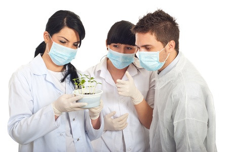 Scientists team examine new plants of cucumber in soil isolated on white background photo