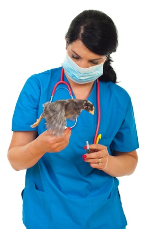 protective mask: Veterinary woman with protective mask has finished the vaccine for little rooster chick and the bird in motion  took  flight Stock Photo