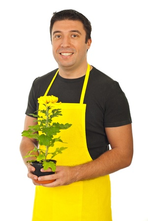 horticulturist: Male gardener or florist in yellow apron holding chrysantemum  isolated on white background