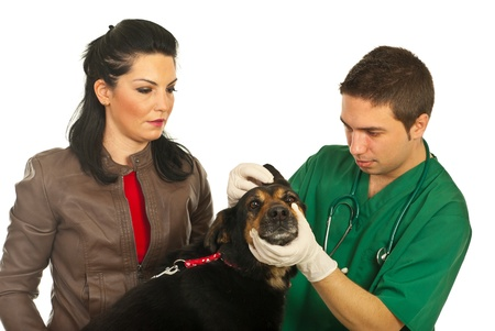 Vet male examine ear dog and his owner looking attentive isolated on white background photo