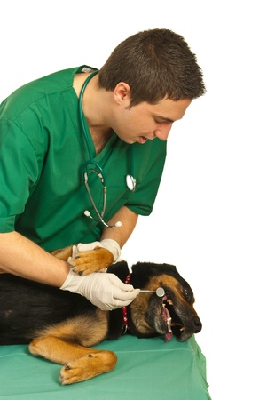 Dog laying on table while  dentist vet looking with the mirror tool at his teeth aganst white background photo