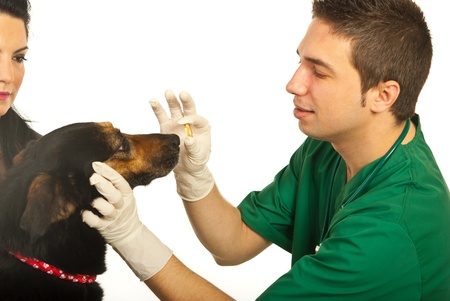 Vet giving pill to dog and owner woman looking at her dog isolated on white background photo