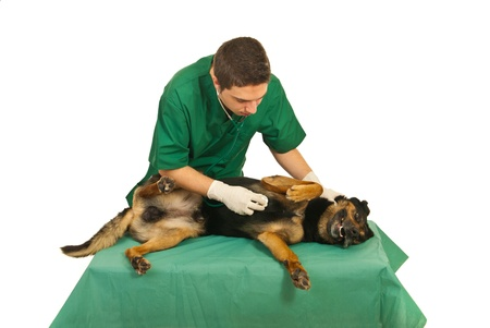 Doctor vet examine dog with stethoscope on a table in his office photo
