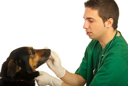 half breed: Vet male doctor with dog isolated on white background Stock Photo