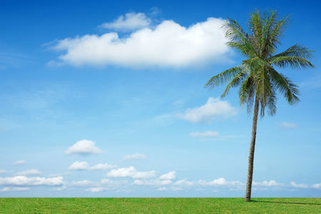 Blue sky and beautiful cloud with coconut tree.