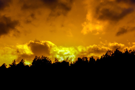 orange-yellow dawn on the background of trees from a clearing in the forest