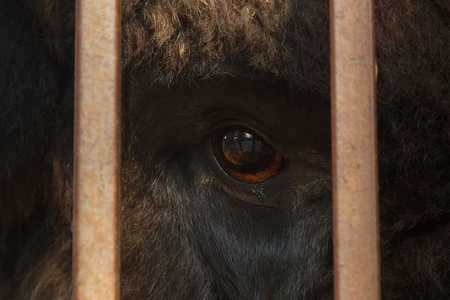 Huge eye of animals photo through the bars, the concept of freedom of animals without violence over them