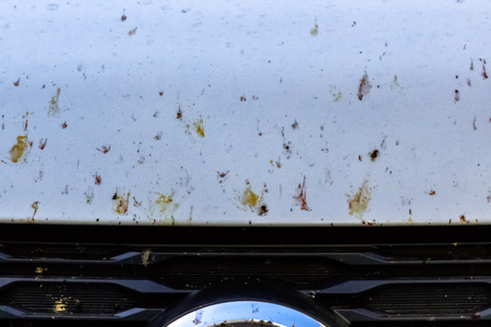 insects on a white bumper of the car, on mirrors in cracks, on the general a part of the SUV