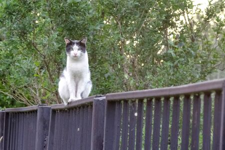 street cat light coloring, on the fence peacefully watching as the photographer approaches Stock fotó