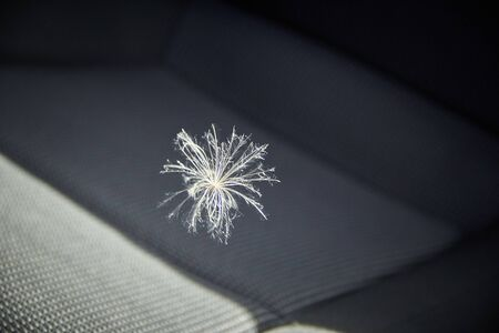 fluff in the car the source of allergies-a symbol of the arrived letter.