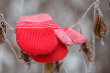 Red mittens in the winter forest. Frozen plants. Snow and snowflakes on the background. Selective focus.