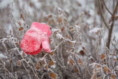 Red mittens in the winter forest. Foto de archivo