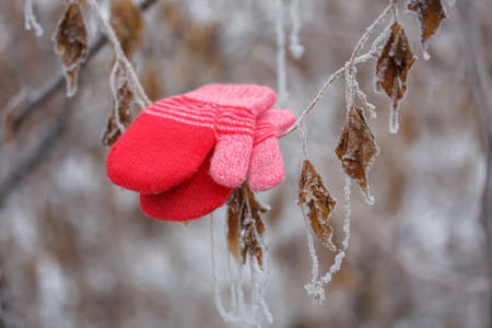 Picture of red mittens in the winter forest. Frozen plants. Selective focus.