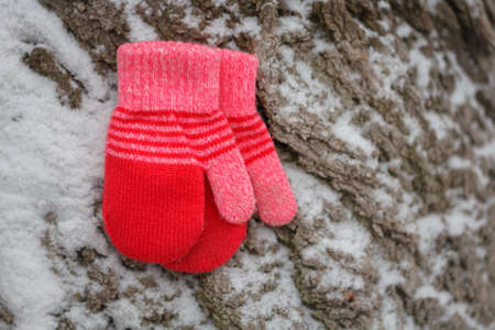 Red mittens in the winter forest. Frozen plants . Snow and snowflakes on the background. Foto de archivo
