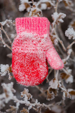 Red mittens in the winter forest. Frozen plants . Snow and snowflakes on the background. Standard-Bild