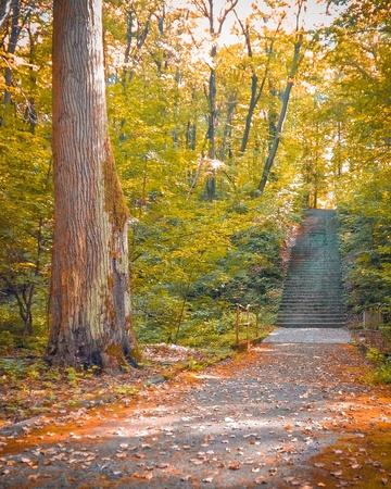 Autumn stairs