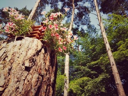 Fleurs dans la forêt Banque d'images - 91190083