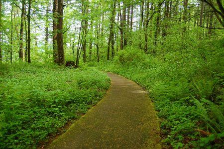 underbrush: Forest