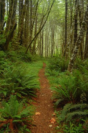 underbrush: A trail through the woods Stock Photo