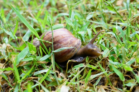 moistness: a snail is animal likes the moistness and earn one Stock Photo