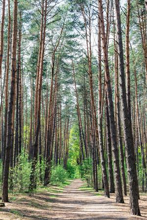 coniferous: Empty road in coniferous forest