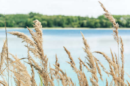 straw on lake forest horizontal line background on summer relax time Banque d'images