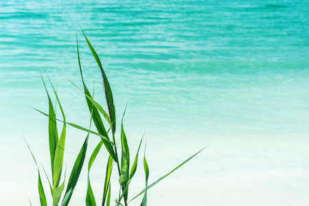 calm water and green plant on azure water background landscape