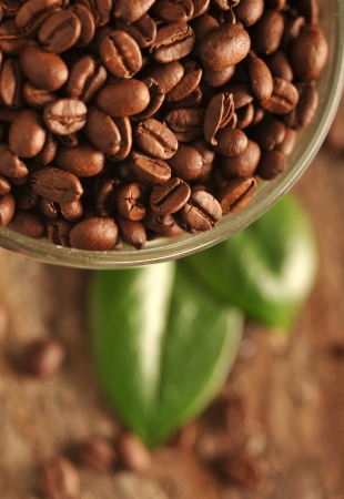 Coffee beans with leaves on the wooden board photo