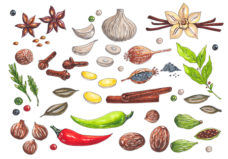 Hand drawn big set with watercolor markers different types of spices