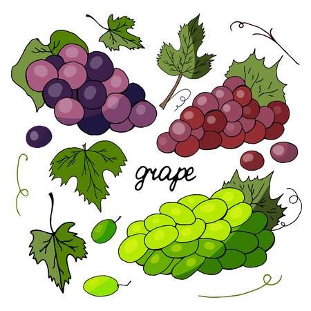 Set of different varieties of grapes and grape leaves on a white background Banque d'images - 122761292