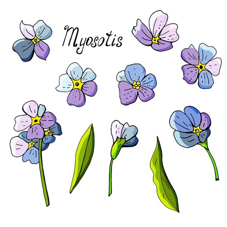 Elements of flowers miosotis on white background Imagens