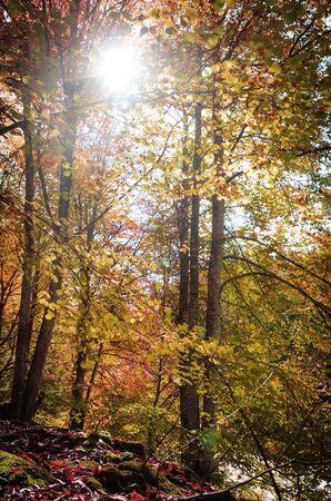 Autumn forest in the sun, autumn landscape