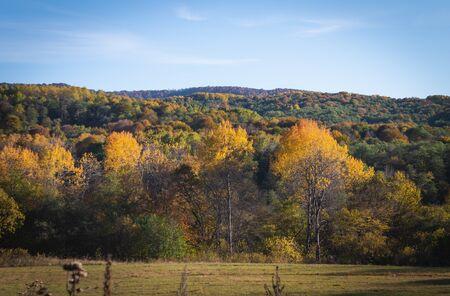 Autumn in the mountains. Colorful trees. Autumn beauty. Mountain View. Standard-Bild