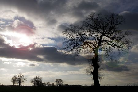 large solitary tree photo