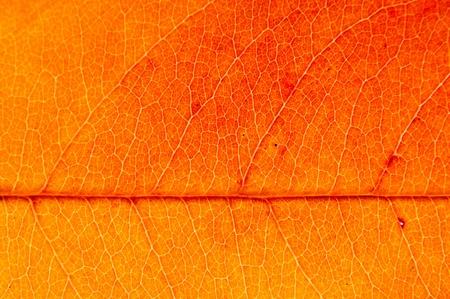 autumn leaf Stock Photo - 11209009