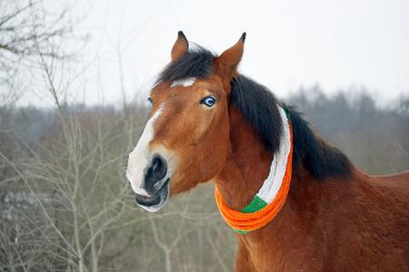 animal st  patricks day: Horse celebrates St. Patricks Day