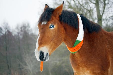 gelding: Horse celebrates St. Patricks Day