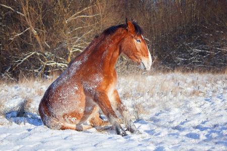 gelding: The horse in the herd