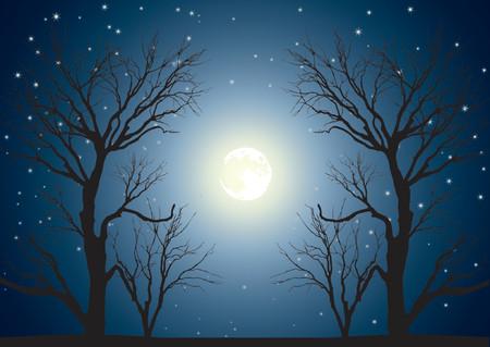 volle maan: Landschap met bomen op de achtergrond van de hemel in een volle maan