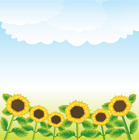 vector Illustration Rural landscape with sunflowers and clouds in the sky Illustration