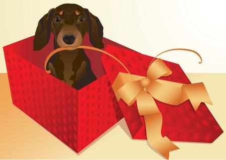dog gift: dachshund Illustration