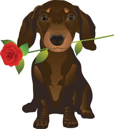 dog rose: dachshund 2