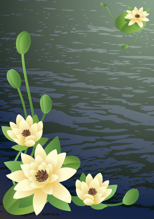 water lilly: Vector illustration -  fine blossoming lotus