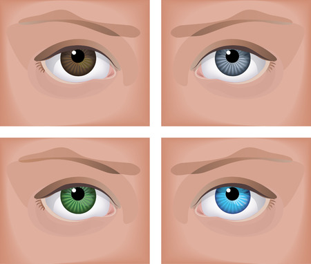 Vector illustration - a realistic human eye (four colors) Vector
