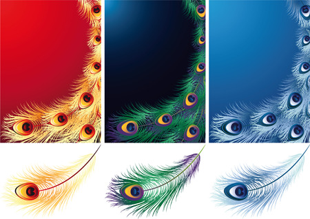 Vector illustration - peacock, phoenix and ice bird feather Vector