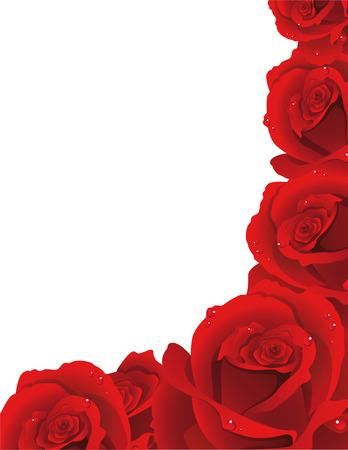 blossoming: Vector illustration - fine blossoming roses Illustration